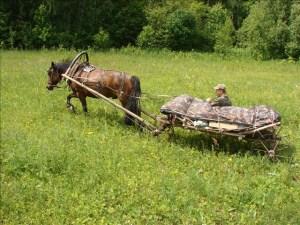 Основные особенности передвижения вьючных лошадей