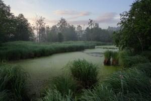 как пройти через болото