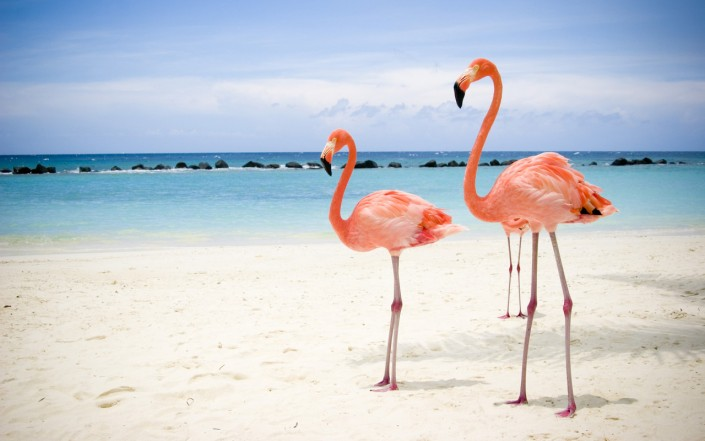 larnaka-flamingo