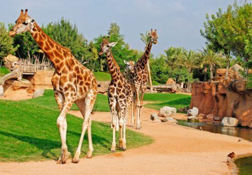 зоопарк в Испании - отдых в Испании с детьми